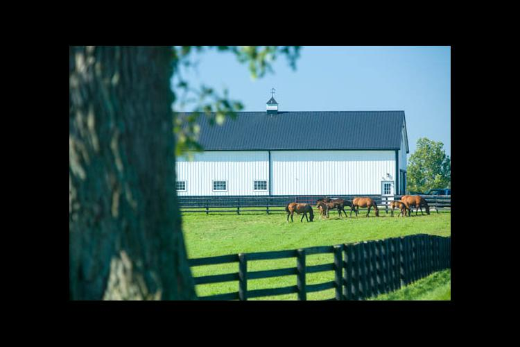 Horses grazing on pasture on UKAg's Maine Chance Farm