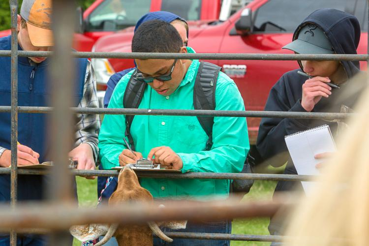 High school students competed in Livestock Evaluation at the 2018 UK Field Day.