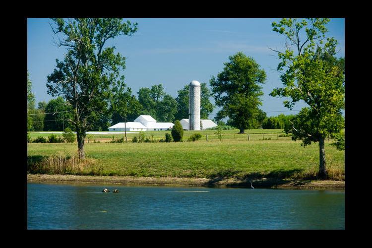 Farm scene with pond