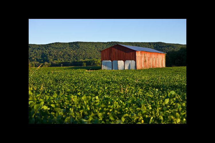 A Kentucky farm
