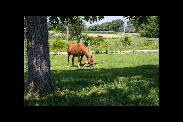 Horses on pasture at UK's Maine Chance Farm