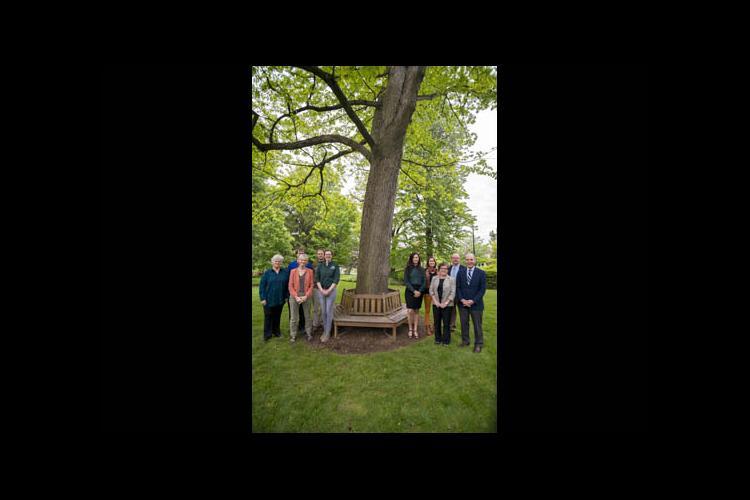 A gathering beneath a white oak on campus