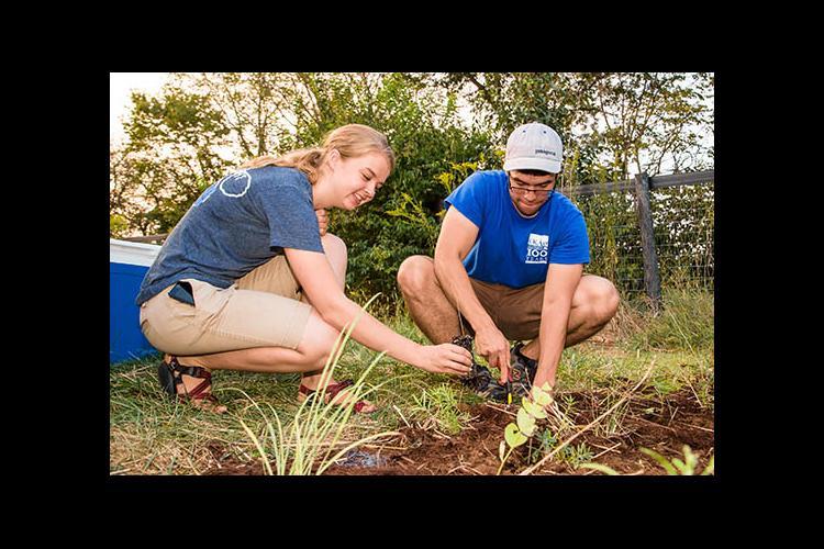 Rachel Hart and Jerrod Penn plant a monarch waystation on UK's Spindletop Farm.