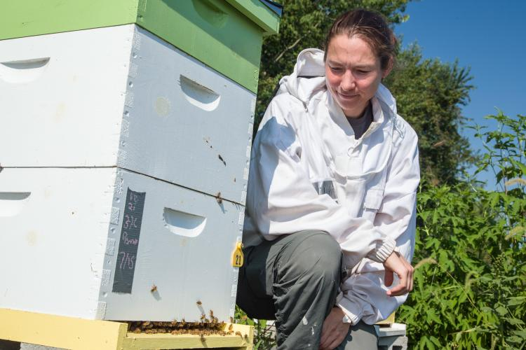 UK entomologist Clare Rittschof poses with one of her research hives at UK's Spindletop Research Farm. Photo by Steve Patton, UK agricultural communications.