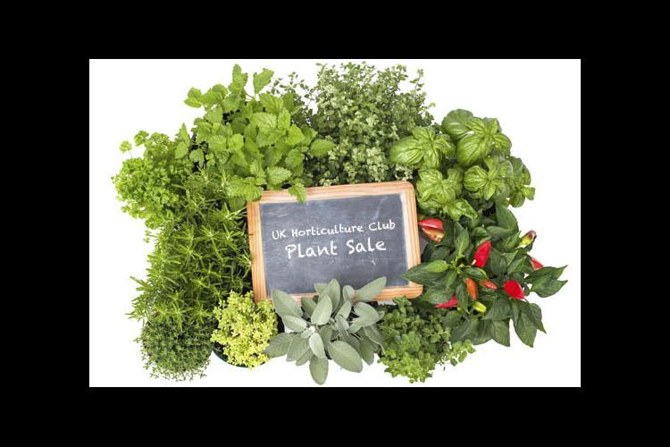 UK Horticulture Club Plant Sale