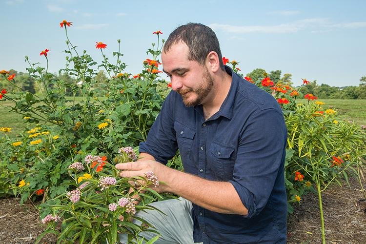 UK doctoral student Adam Baker examines a milkweed in one of his research trials at UK's Spindletop Research Farm. Photo by Matt Barton, UK agricultural communications.
