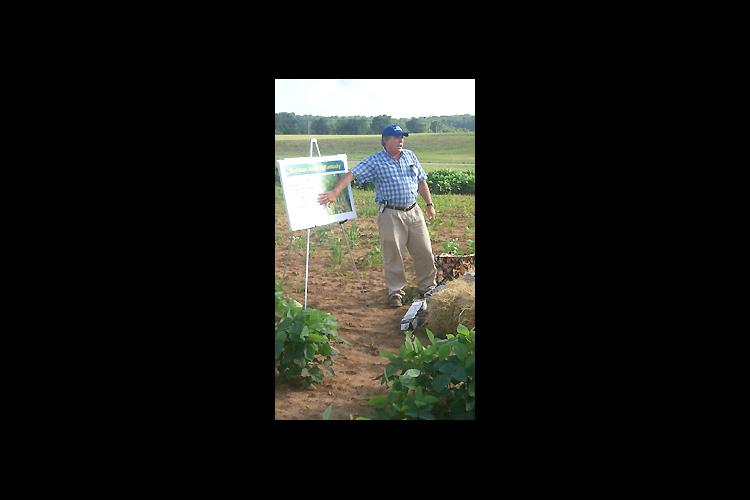 UK Entomologist Grayson Brown discusses the soybean aphid during the recent UK College of Agriculture Field Day in Princeton. The plant pictured below is covered with the aphids.