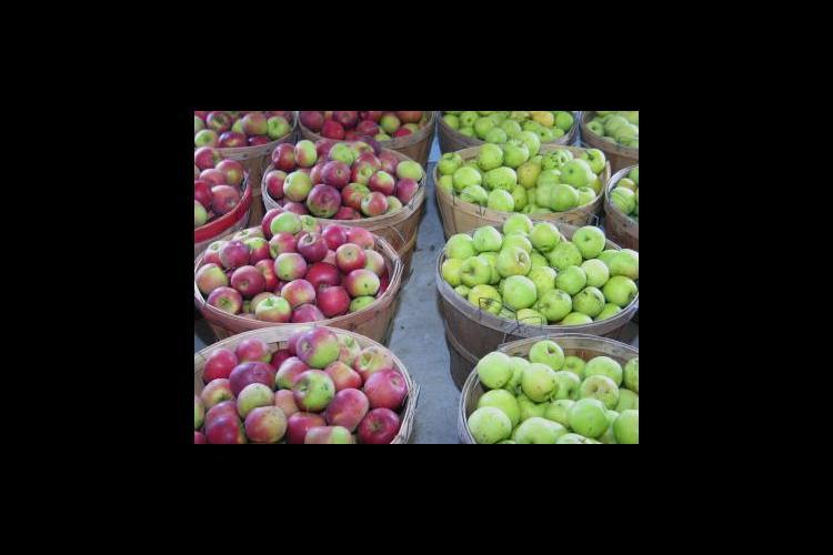 Apples in a Laurel County farmers market.