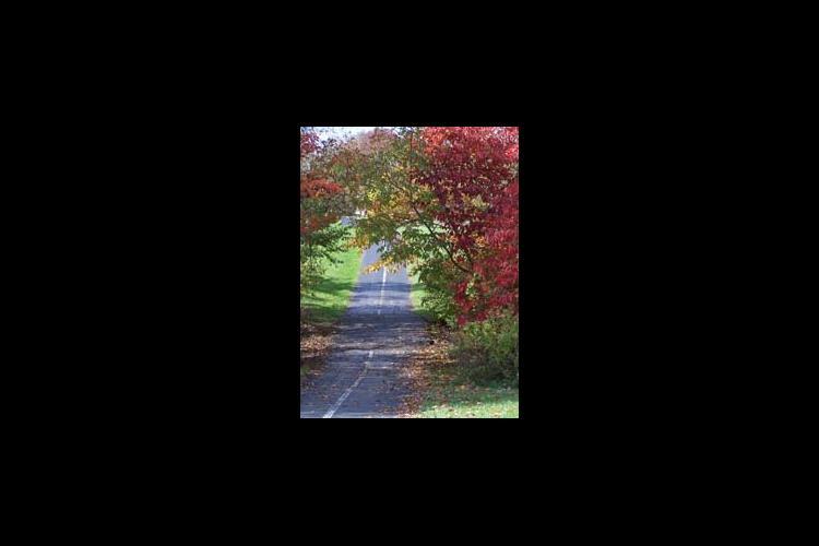 paved trail through arboretum
