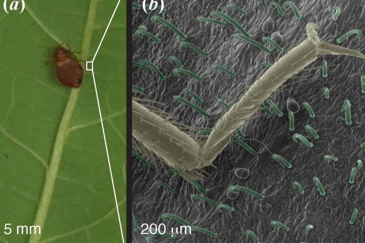 Some very hopeful signs of progress in the battle against bed bugs as work done by researchers at UK and UC, Irvine.