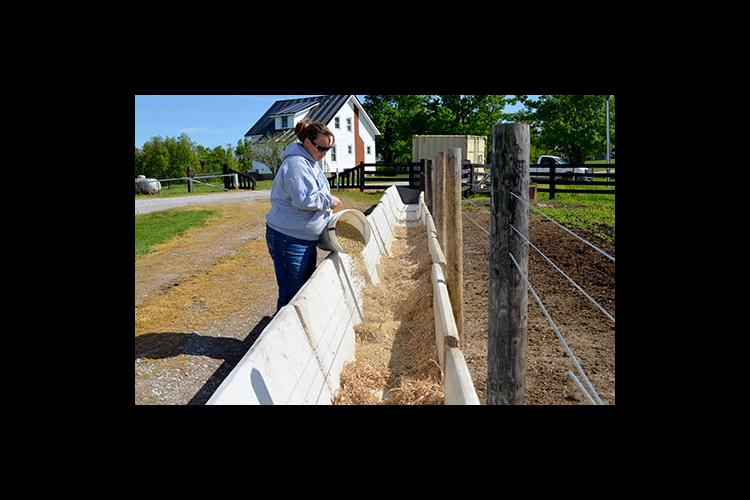 Blair Knight, UK extension associate, pours soybean hulls into a trough for cattle at the UK Research and Education Center.