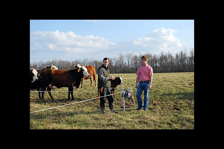 Greg Reynolds, left, and Jacob Reynolds install temporary fencing on a paddock.