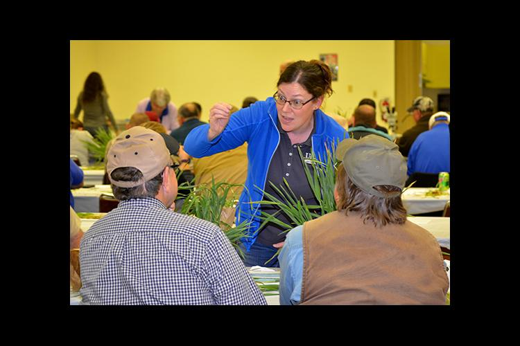 Carrie Knott, UK grain crops extension specialist, talks with two farmers about the condition of their wheat.