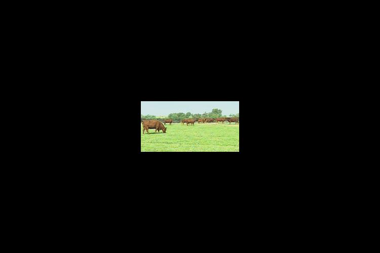 Breaking up a current pasture into three or four smaller fields for rotational grazing can boost profits