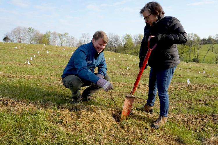 Rob Samuels, Maker's Mark, and UK's Nancy Cox plant seedlings at Star Hill Farm. Photo provided by Maker's Mark.
