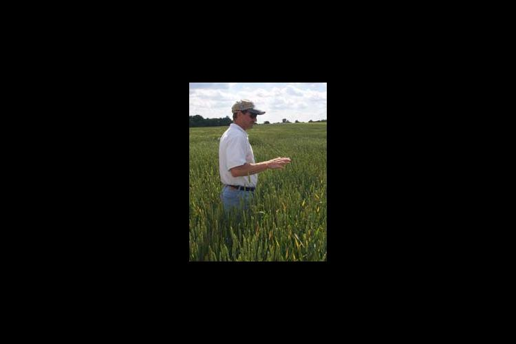 """Don Hershman scouts a wheat research project at the Research and Education Center earlier this year. Hershman, a plant pathologist, will talk about seed treatment fungicides at the """"Wheat Decisions 1999"""" program September 14 in Henderson."""