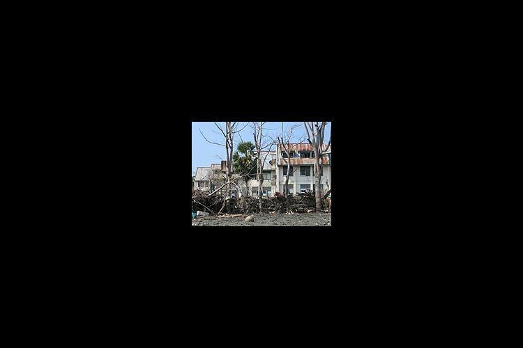 tsunami damaged buildings
