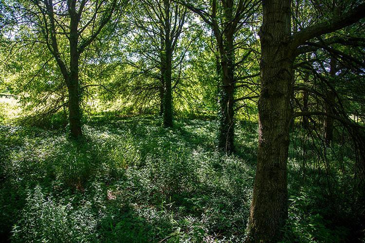 A wooded flood plain
