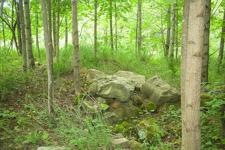 Forest with boulders