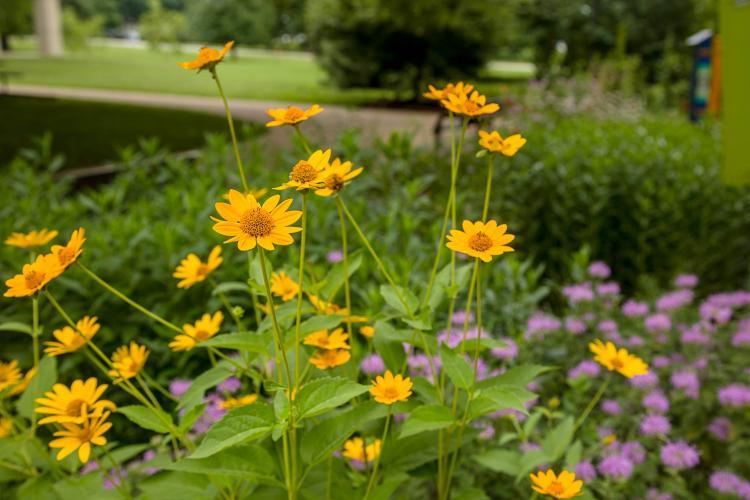 Flowers in a pollinator garden