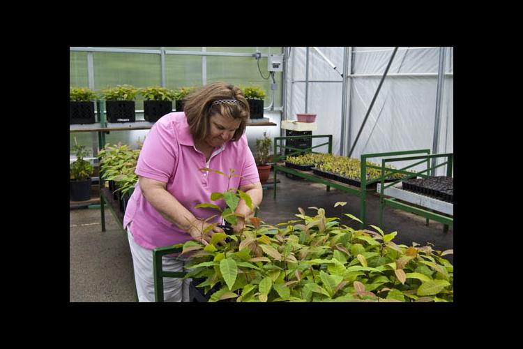 Joyce Belcher in Lake Cumberland 4-H Educational Center's greenhouse