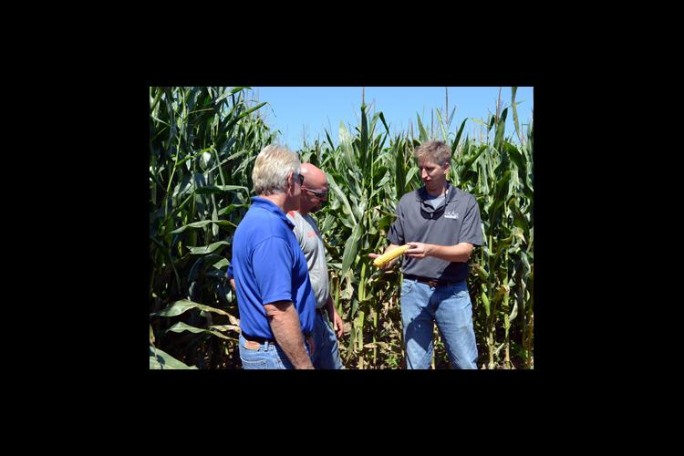 Chad Lee, right, shows Bob Wade, left, and Richard Colvin the result of irrigation on the corn crop thus far.