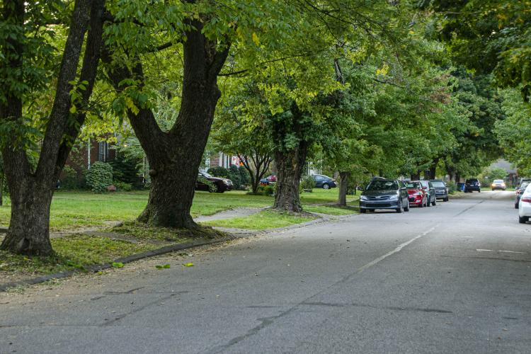 Trees line a Lexington, Kentucky, street.