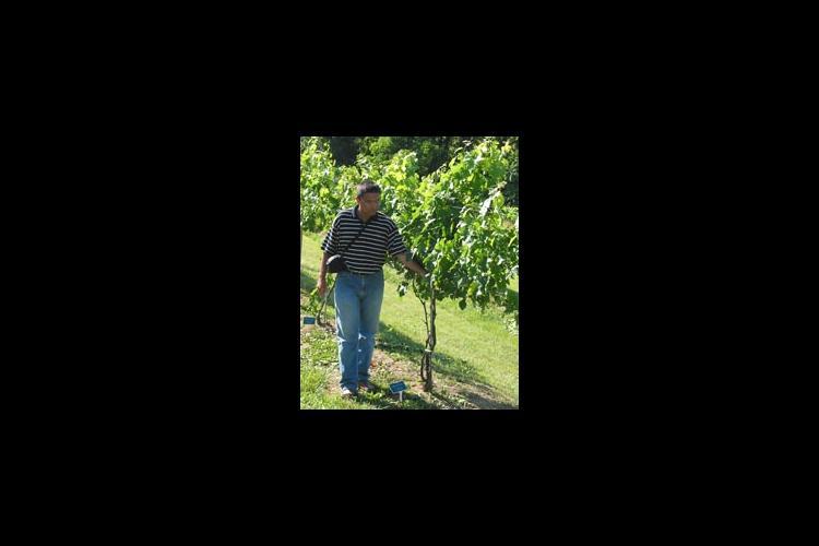 Kaan Kurtural walks through the vineyard at Eden Shale Farm in Owen County.