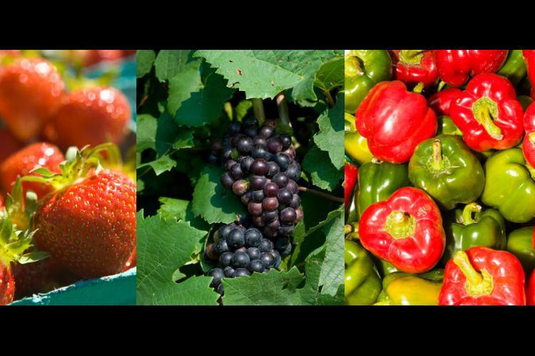 strawberries, blackberries, peppers