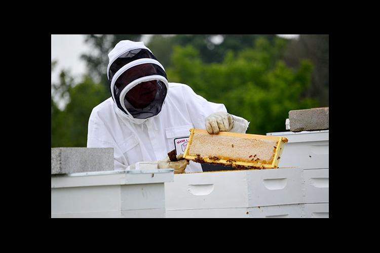 Pulaski County beekeeper David Gilbert removes a frame and shows its full of honey.