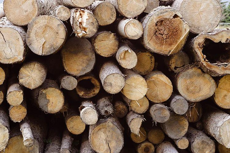 logs stacked in a heap