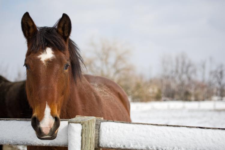 Horse, winter, snow, fence