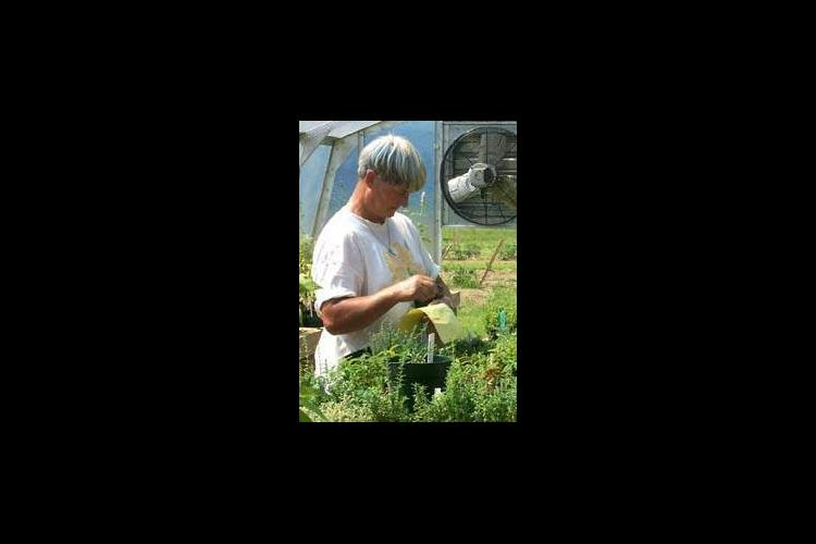 Master Gardener Pat Buford, collects herbs from the greenhouse to be planted in nearby beds that are part of a greenhouse and garden project of the McCracken County Master Gardeners.