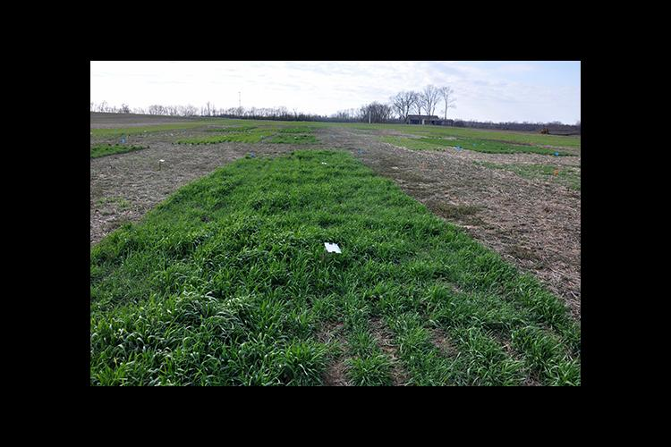 A cover crop research plot at UK's Spindletop Research Farm