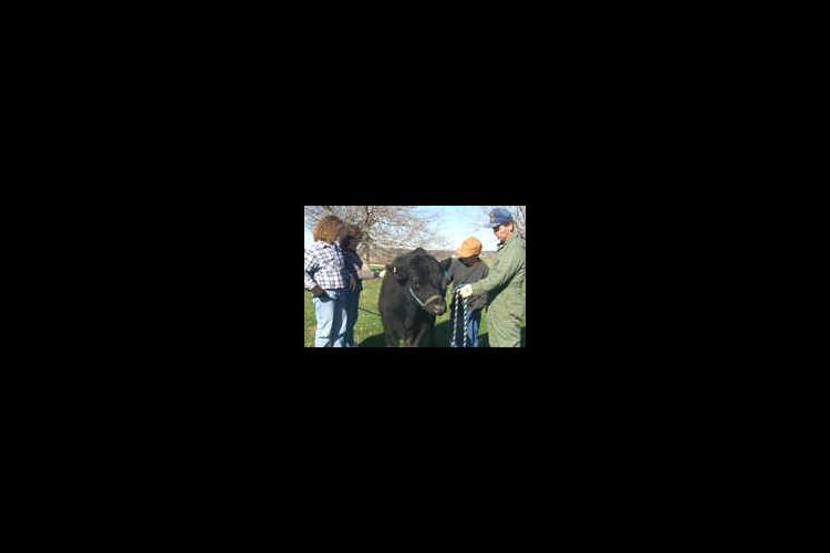 Brittany Wilkinson (far left) makes caring for her angus heifer, Lady, a family affair.