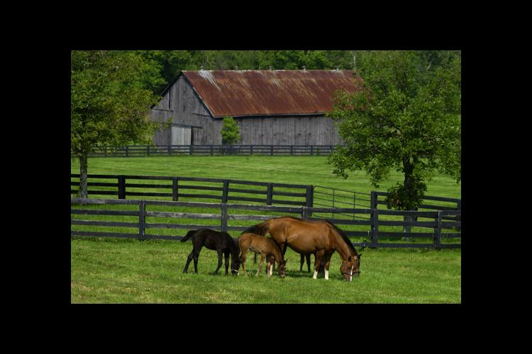 Horses in front of barn with black fence