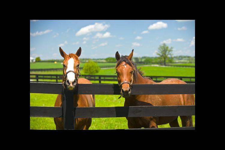 Horses on Maine Chance Farm