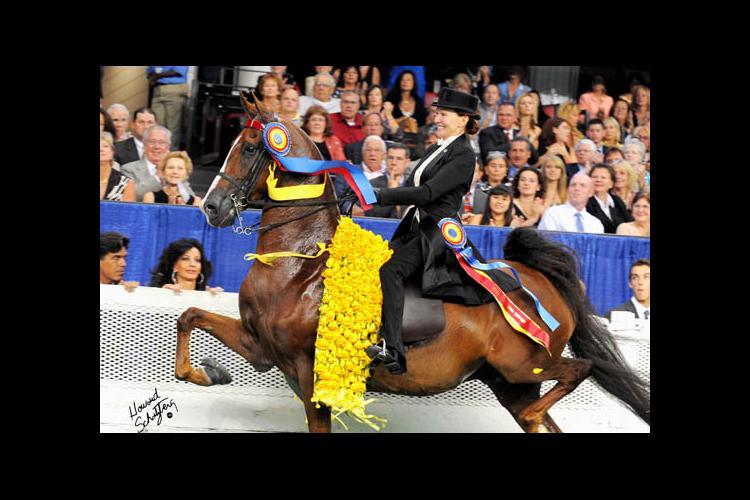 Misdee Wrigley Miller on horse