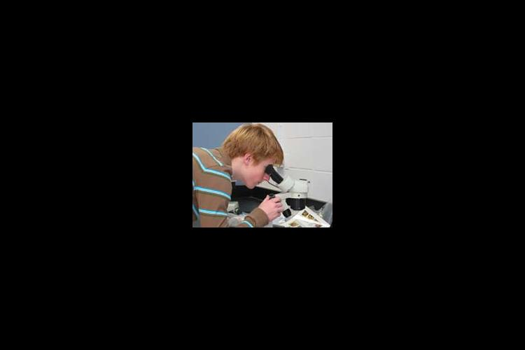 Woodford County High School sophomore Trent Goodin uses a microscope to examine a ladybug (Asian lady beetle).