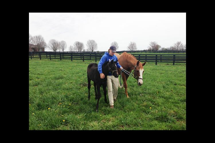 UK senior Jackson Buchanon works with horses during an internship, which is a requirement of students in the program.