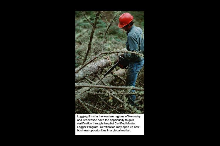 Man Logging with chainsaw