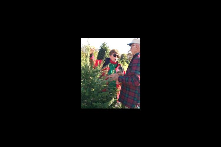 UK Extension Forestry Specialist Deborah Hill discusses pruning Christmas Trees at Bill Moody's farm.