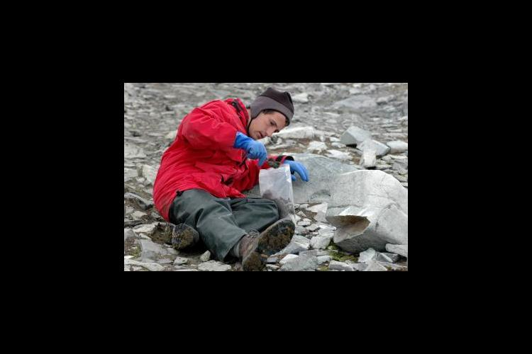 UK entomologist Nick Teets collects midges on a previous trip to Antarctica.