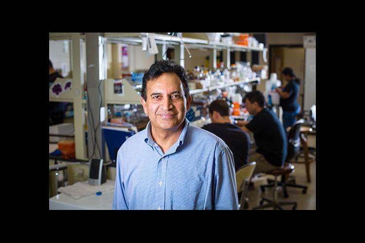 Reddy Palli in his lab.