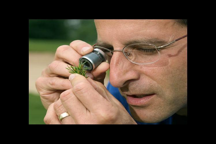 Professor Paul Vincelli examines turfgrass for disease.