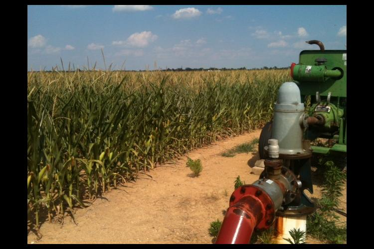 Irrigating the corn crop