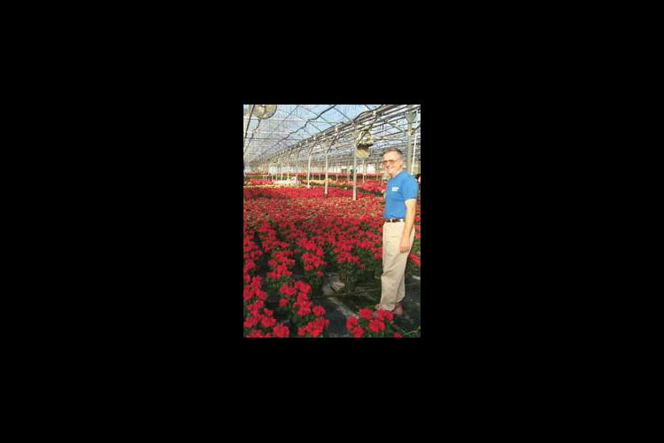 Bernie Bourbeau stands inside one of his greenhouses filled with poinsettias ready for the holiday season