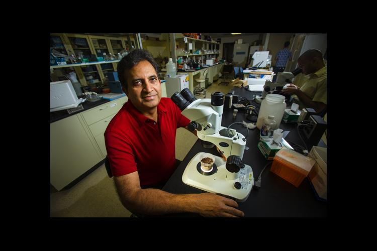 Subba Reddy Palli in his UK lab.