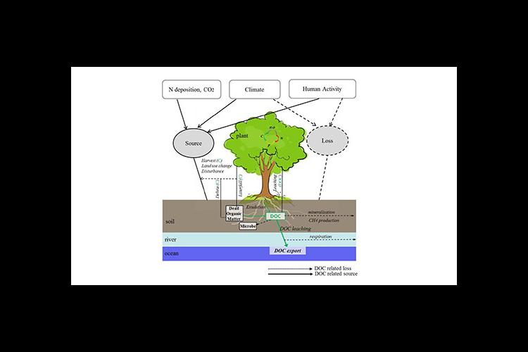 An illustration of how dissolved organic carbon is produced, consumed, stored and transported.