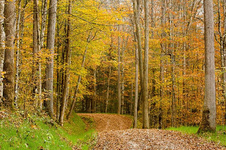 A leaf covered road winds through Robinson Forest in autumn.